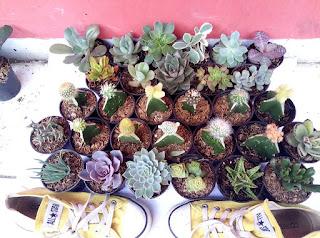 kaktus-dan-sukulen.jpg