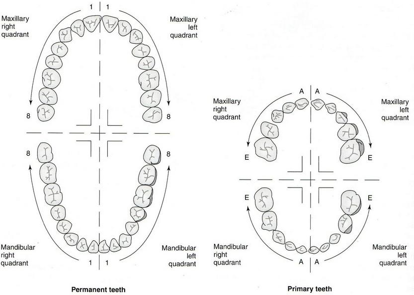 EMS SOLUTIONS INTERNATIONAL marca registrada: Tooth