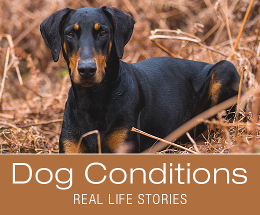 A Subtle Sign for One Dog, a Major Red Flag for Another: Jade's Story of Intestinal Obstruction