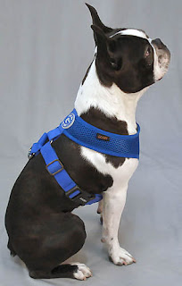 "The Freedom Harness avoids the dog's ""armpit"" and matting issues."