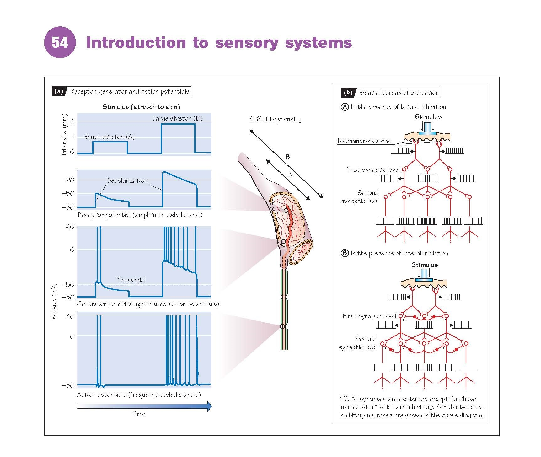 Introduction To Sensory Systems
