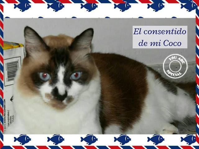Coco, gatos