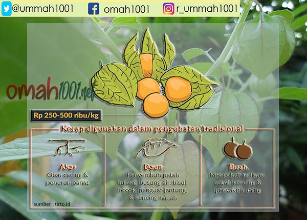 Pilunsur, Omah1001