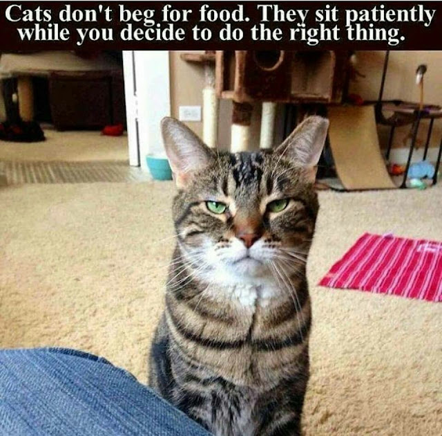 Funny cats don't beg for food joke picture