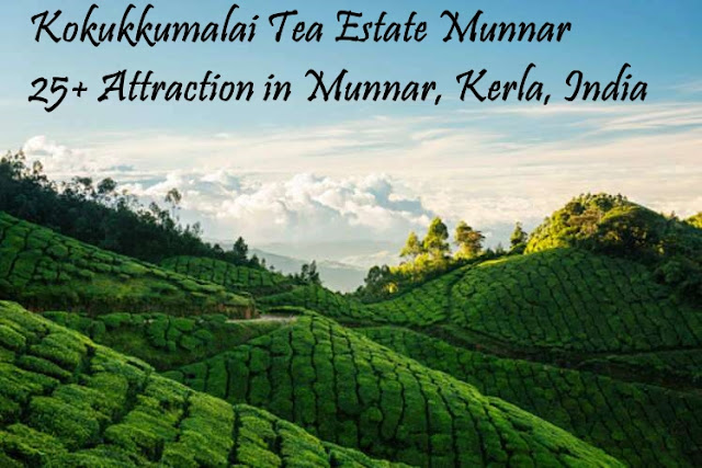Kokukkumalai Tea Estate Munnar