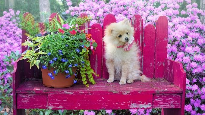 Papel de Parede Cachorrinho no Jardim