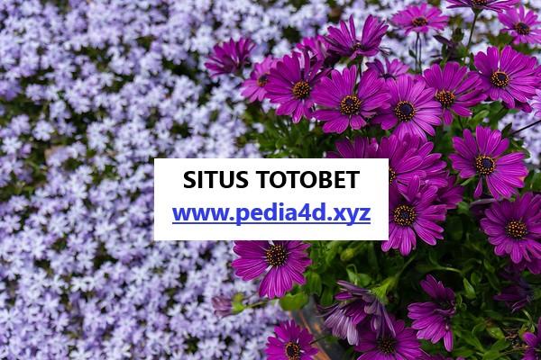 Bermain sekarang masih di situs totobet online