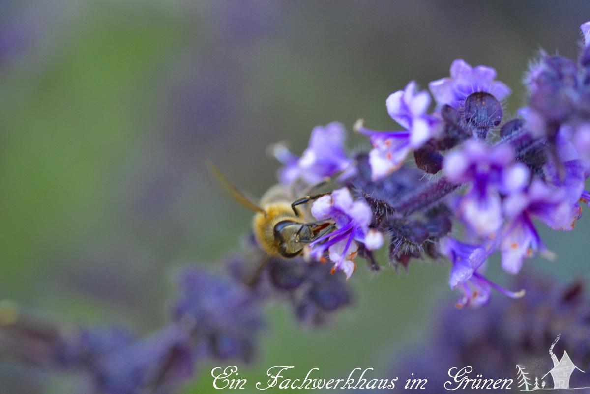African Blue, Bienen, Kräuter