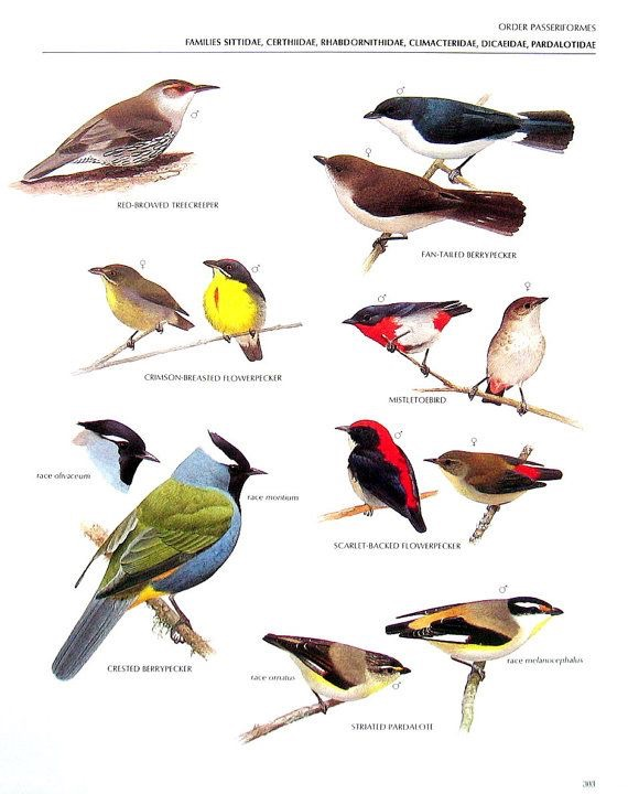 Aves | Ornitologia
