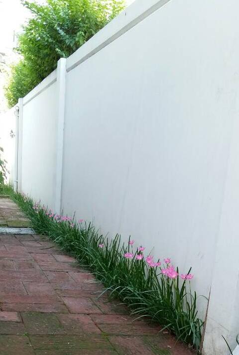 บัวดินริมกำแพง