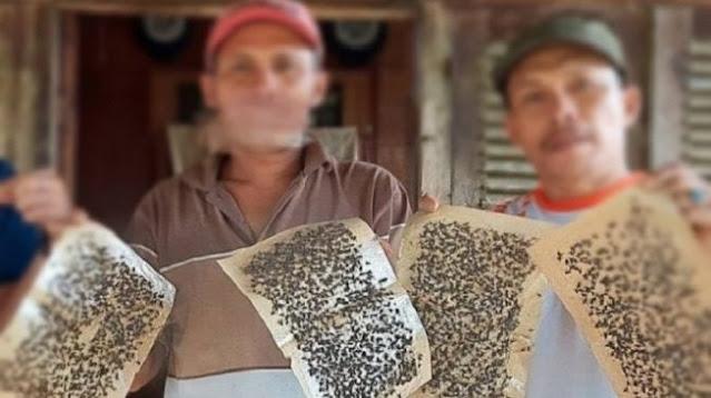 Astaga! Lalat Menggila dan Serbu Permukiman Warga Desa di Banyuwangi Ini