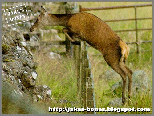 How To Find Deer Part 1 Fences Footprints And Poo Jake