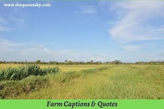 101+ Farm Captions For Instagram [ 2021 ] Also Farm Quotes