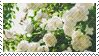 2016-02-29_White%2BFlower%2Bstamp_99x56_
