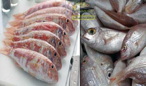 تعرف على الفرق بين سمك البربون و سمك المرجان