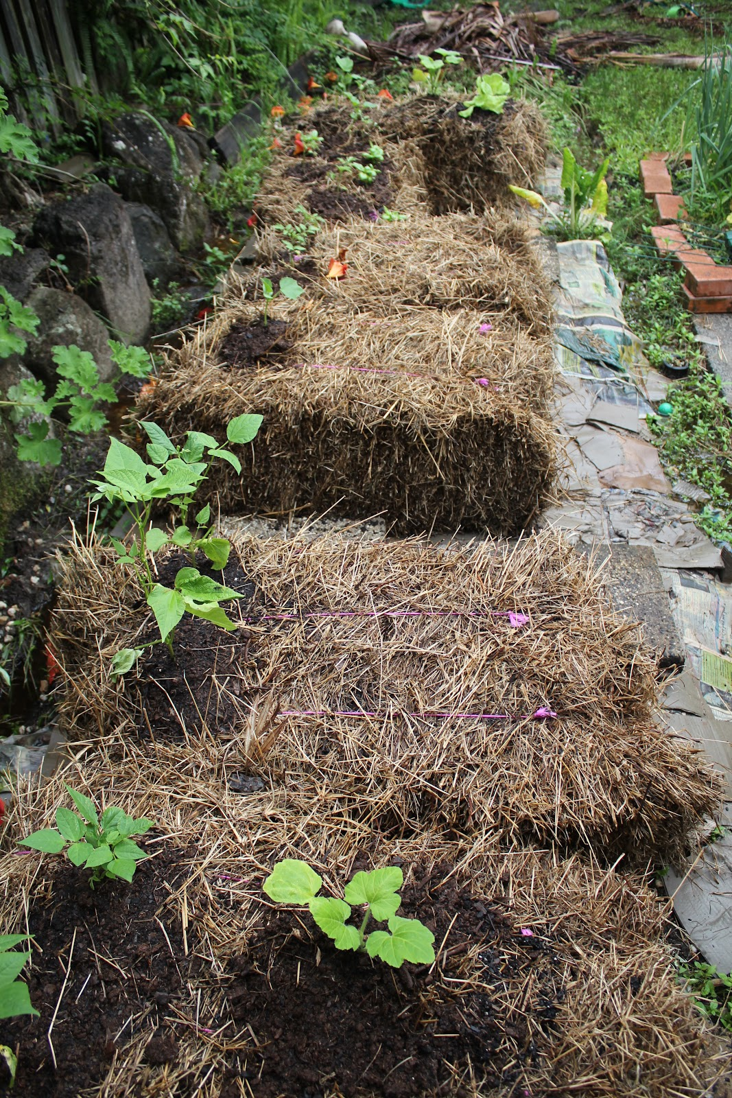 Simple, Green, Frugal Co-op: The Great Straw Bale Adventure of 2011