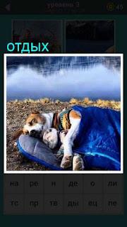 на берегу водоема на матрасе в обнимку лежат две собаки отдыхают