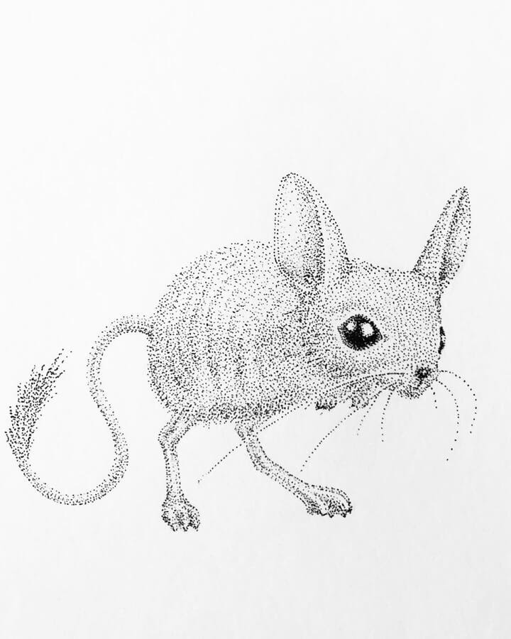 08-Kangaroo-mouse-María-Lecanda-www-designstack-co