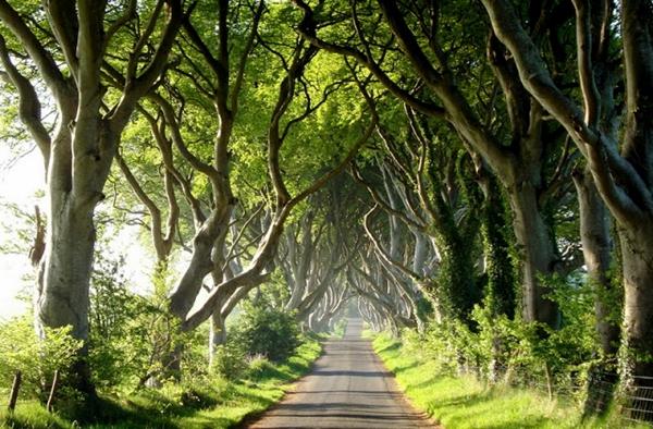 Jadikan Dirimu Seperti Pohon