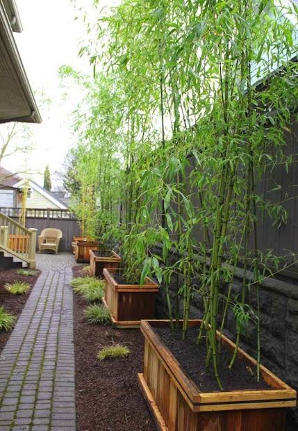 bamboo in garden - fascinating
