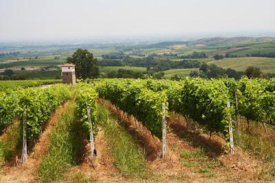 Этот виноградник расположен в Македонии