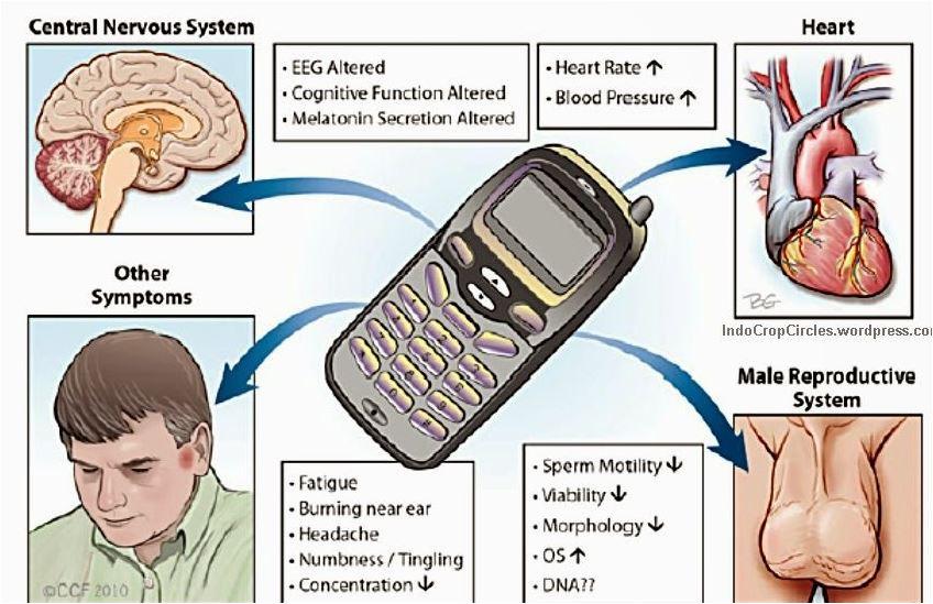 Tempat Menyimpan Smartphone Yang Berbahaya Bagi Kesehatan, Awas
