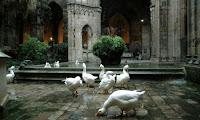 Ocas de la Catedral de Barcelona