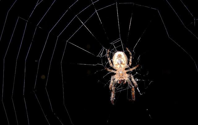 階段の窓で飛んでくる虫を待ち構える蜘蛛