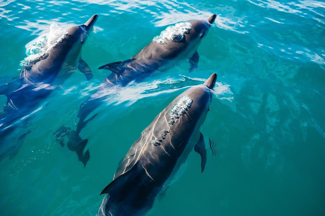 Whales and dolphins have rich 'human-like' cultures and societies