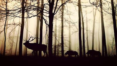perbedaan hewan buas dan hewan jinak dalam berperilaku mencari makan