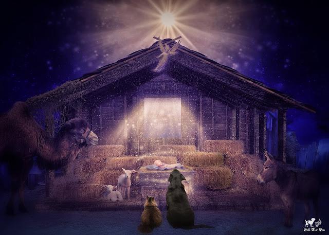 Nativity with Matt & Matilda (©Jenny Bell @ Bell Fur Zoo)