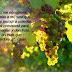 El Fruto de los Sarmientos (Juan 15:7-15)