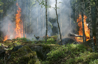 PL quer criminalizar incêndio em Unidades de Conservação de Proteção Integral