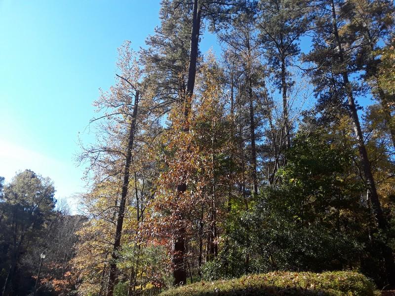 Couleurs de l'automne à Durham