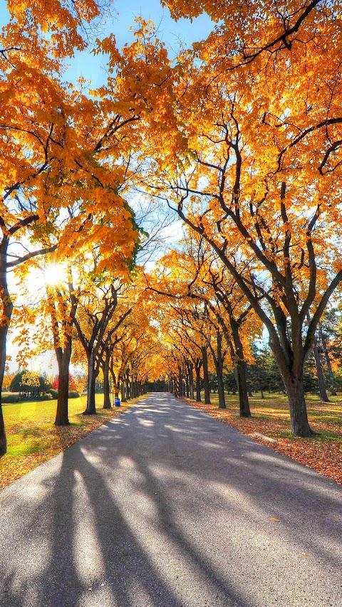 Công viên lá vàng