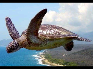 Florida Woman Survives Being Hit By Flying Turtle |interesting news|