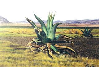 Maguey_Rafael_Huerta_Carreón_paisajista