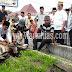 Pemko Gunungsitoli Sembelih 5 Hewan Kurban Pada Idul Adha 2016