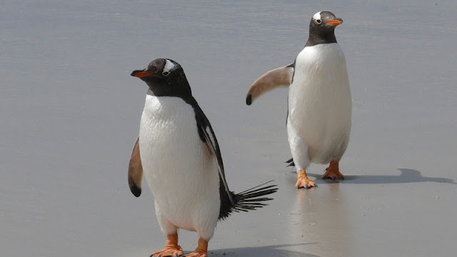 two penguins on the sand