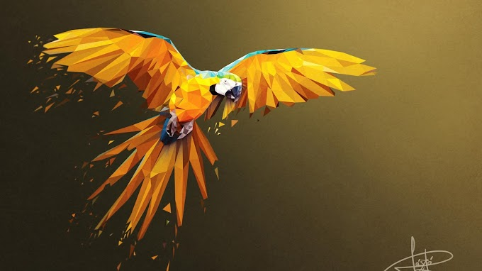 macaw lowpoly art 4k Wallpaper