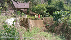 Bendungan Irigasi Rusak, Ratusan Hektar Sawah Tak Jadi