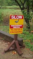 Sign for Alae'ula protection – Waimea Valley, Oahu – Feb. 16, 2014