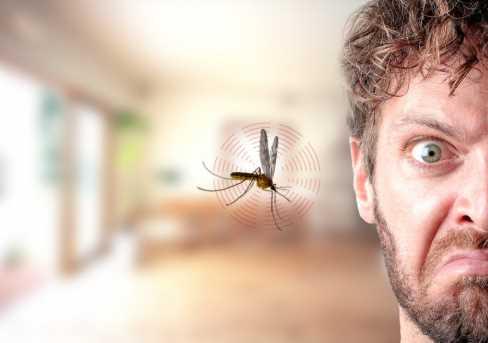 Inilah Bahan Alami Pengusir Nyamuk Yang Perlu Kamu Coba