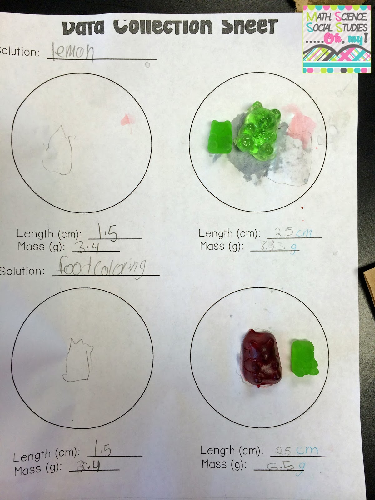 Corkboard Connections Investigating Gummy Bears