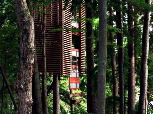 4 Ağaç Evi