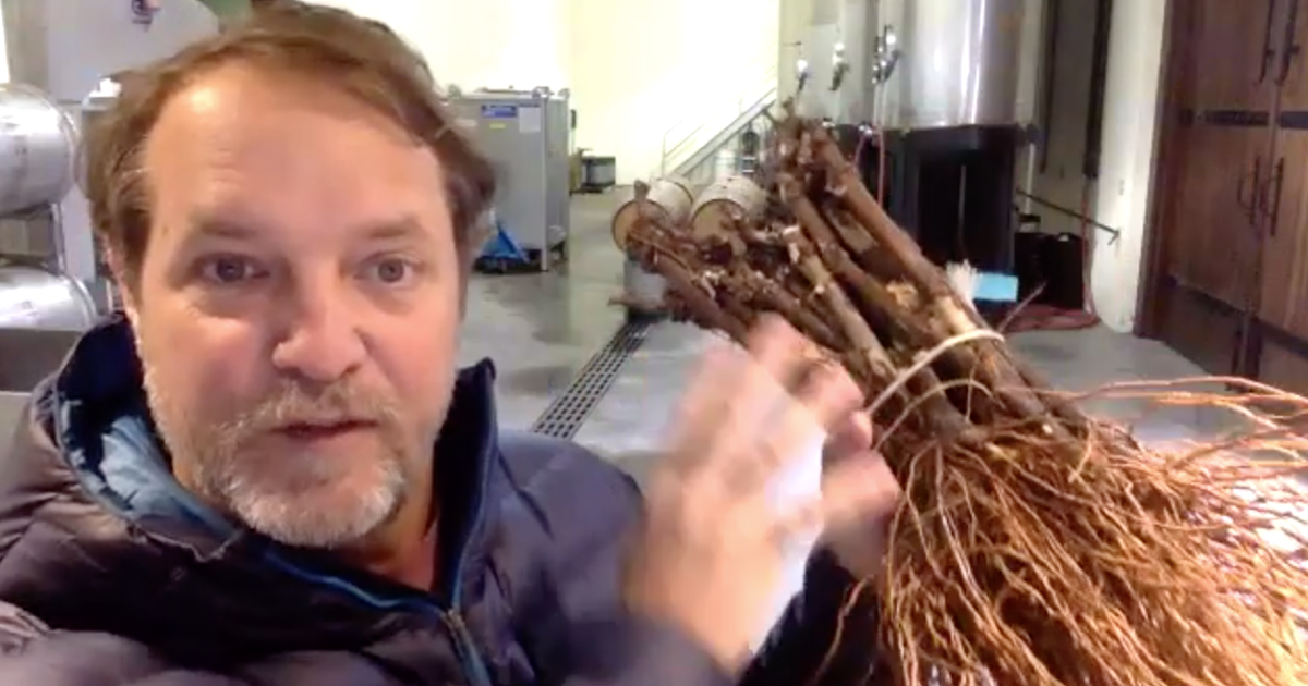 New video: Winegrower Chad Melville