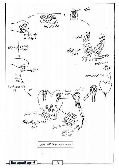 ملخص جميع رسومات الاحياء لثالثه ثانوي بطريقة واضحة وجميلة جدا
