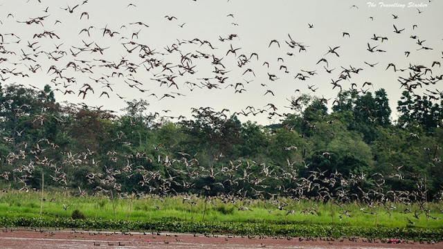 Tinsukia, Assam
