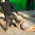 Video: Regresa a México de Estados Unidos, lo confunden con ladrón y lo linchan; descanse en paz