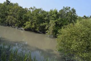 Small water bodies in Sundarban